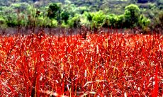 Colours of the bushveld...