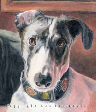 Lilly greyhound puppy portrait