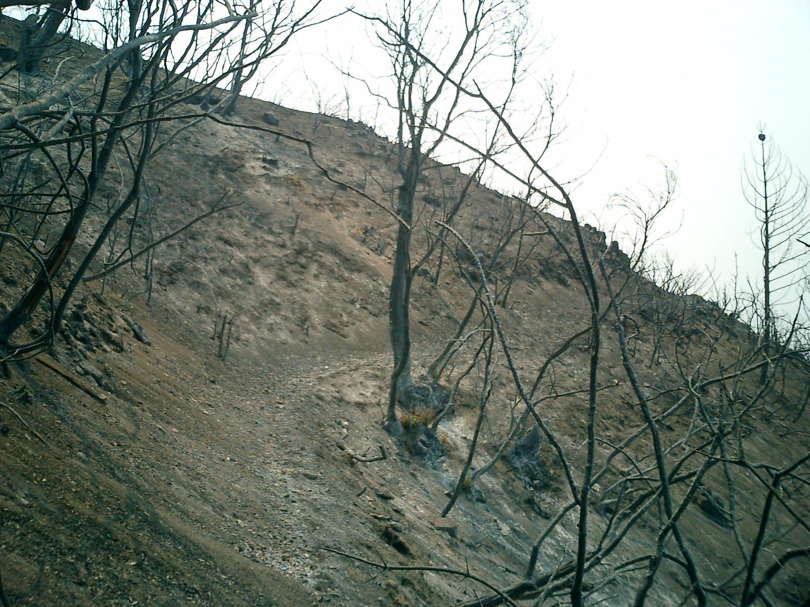 burned-slope