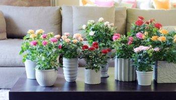 Весняні квіти в інтер'єрі