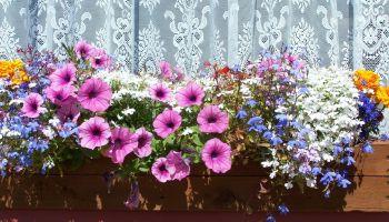 Довготривалі букети: 7 яскравих квіток для них