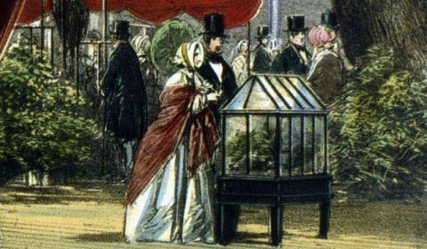 Cómo unas ingeniosas cajas de cristal se volvieron poderosas armas en manos de colonizadores británicos – BBC News Mundo