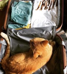 Evi's koffer