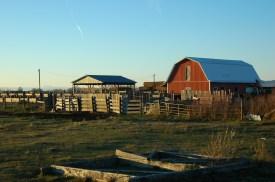 alexismoser-farm