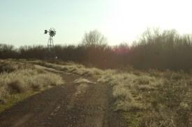 alexismoser-windmillfield