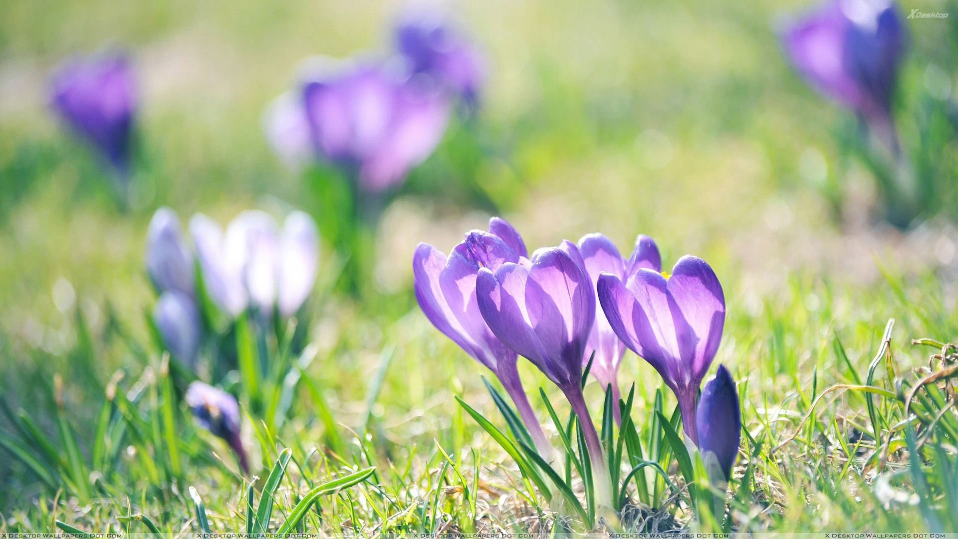Image result for flowers on the ground
