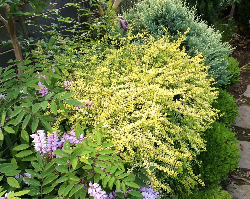 Indoor Plants Gold Coast
