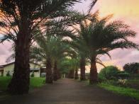 Espacio Verde Sunrise 5