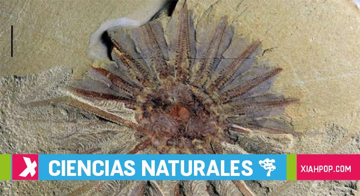 Fósil de misteriosa criatura de 18 tentáculos fue hallado en China