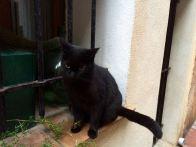 kitty on window outside