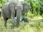 09-20120214-Wild_Mothers