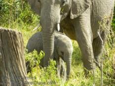 11-20120214-Wild_Mothers