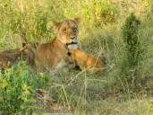 13-20120215-Wild_Mothers