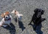 20150527-KSM-Puppy_Friends