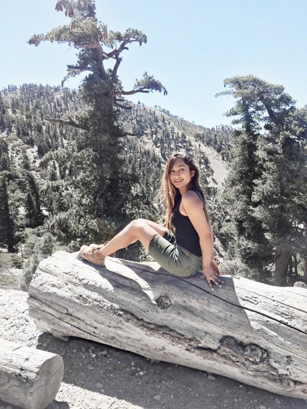 mt baldy forest