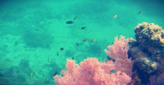 Snorkeling en Krabi
