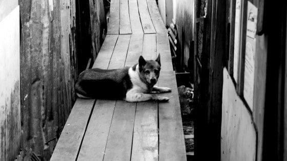 Perro callejero en Tailandia