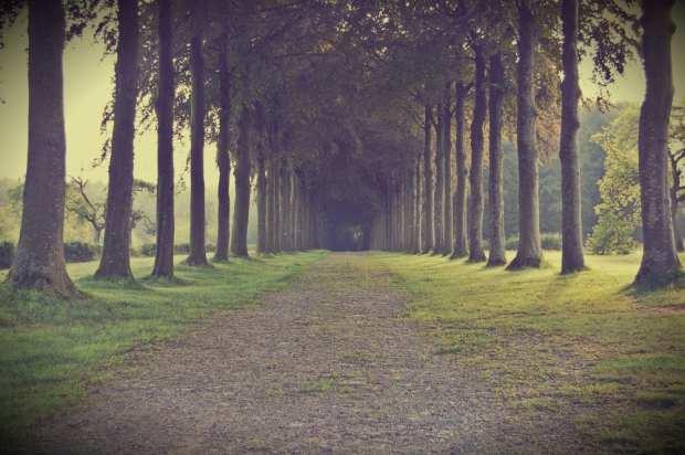 Camino de árboles