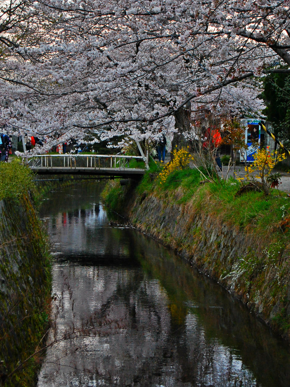 Paseo del filósofo - Kyoto