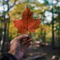 Los mejores parques naturales de Canadá