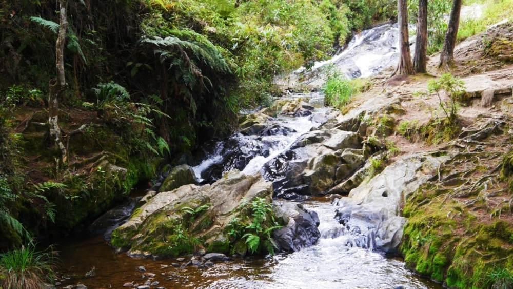 Medellín - Qué ver - Parque Arví