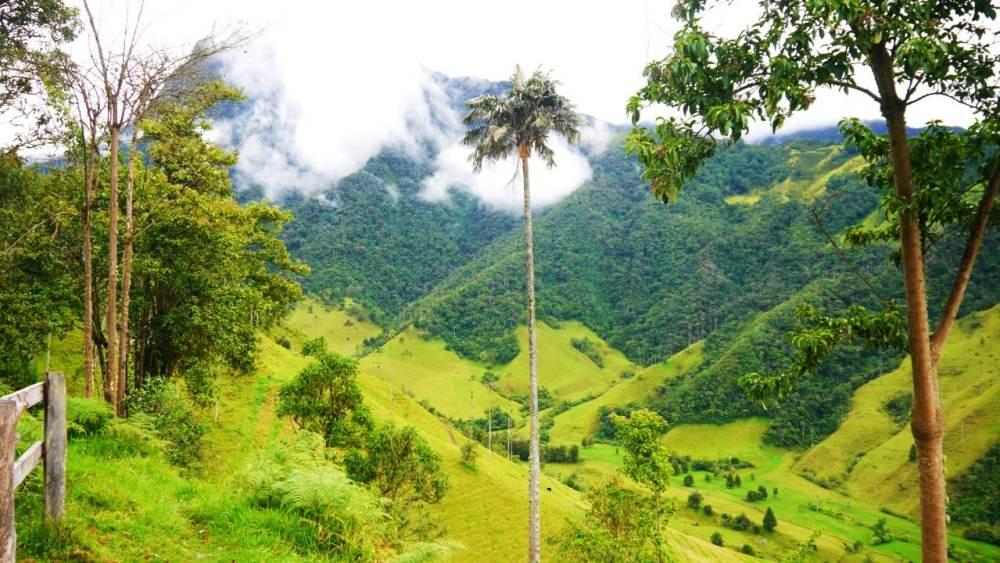 Paisaje del Valle del Cocora - Una de las atracciones imperdibles de Colombia