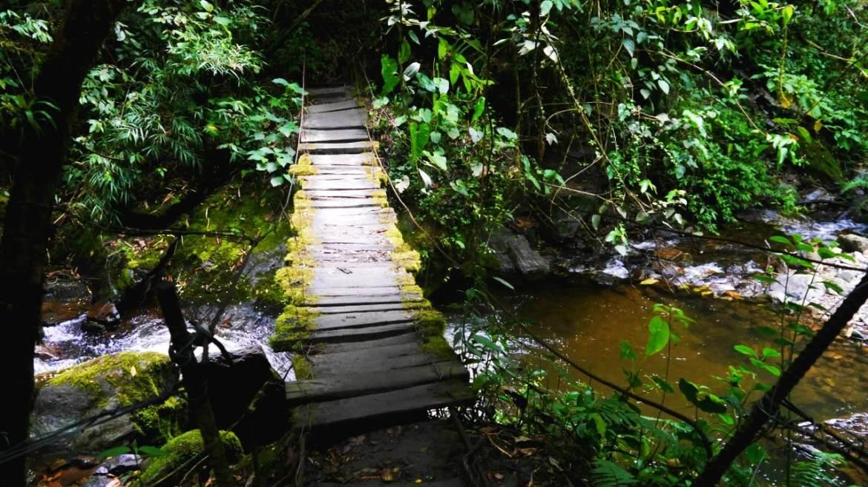 Uno de los puentes de madera del Valle del Cocora - Eje Cafetero de Colombia