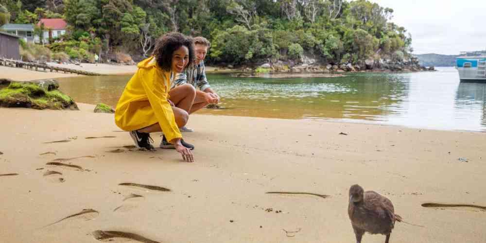 Dónde ver kiwis en su hábitat en Nueva Zelanda - Isla Stewart