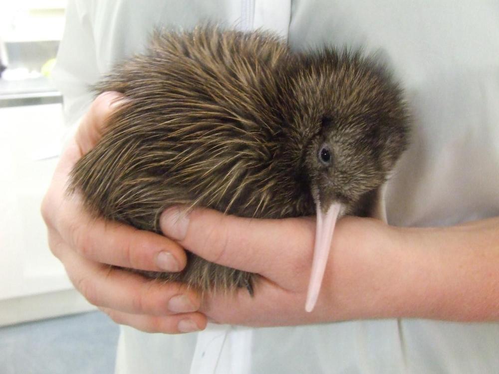 West Coast Wildlife Centre - Santuario de kiwis en Nueva Zelanda