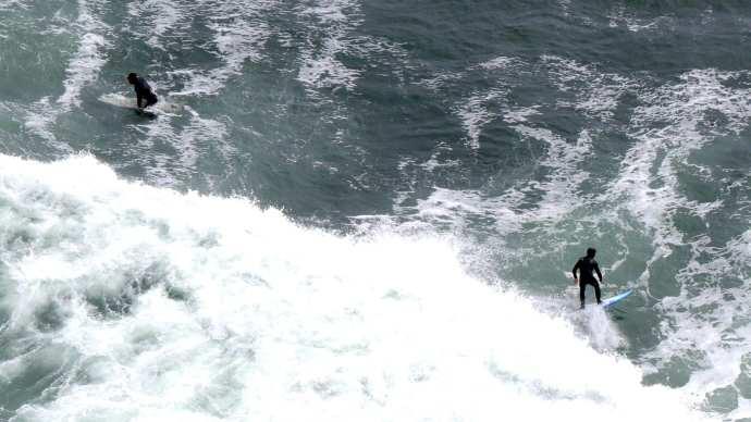 Es una leyenda urbana que las aguas de la San Francisco Bay estén infestadas de tiburones