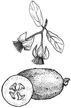 μαργαριτάρι μαρμελάδα ανεμιστήρα που χρονολογείται ρασιάν dating πρακτορείο δραμαναποτέ