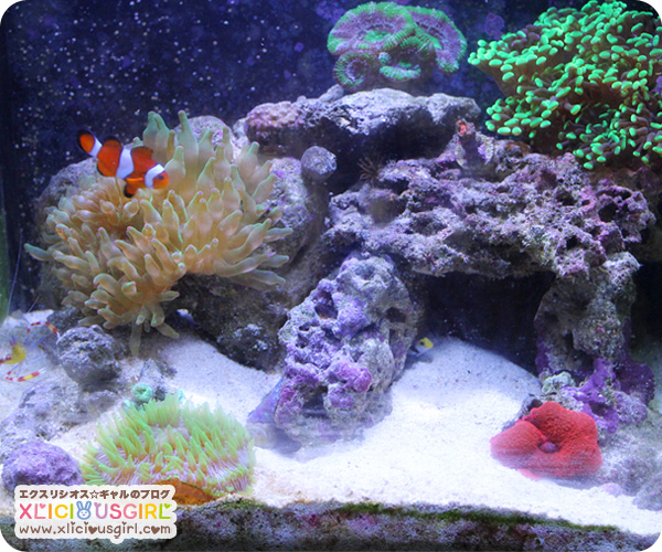 10 gallon nano salt water tank