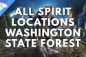 All Spirits Washington State Forest