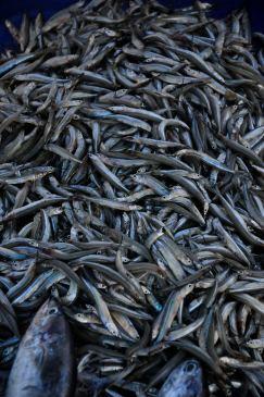 Fish @ Galle