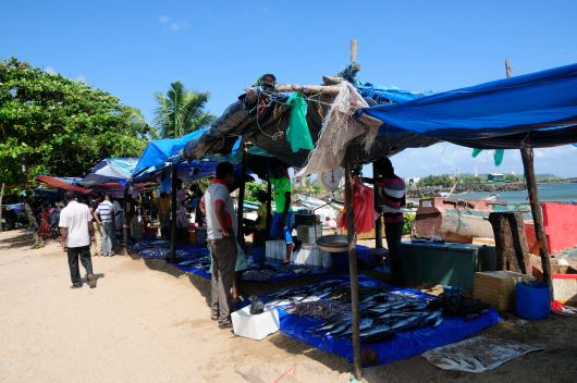 Fish stands @ Galle
