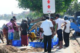 A fishy business @ Galle