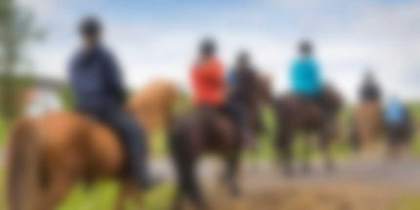 Horse Rent