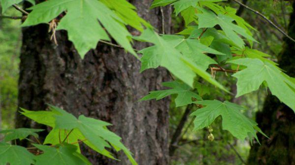 Как можно найти воду в земле при помощи растений