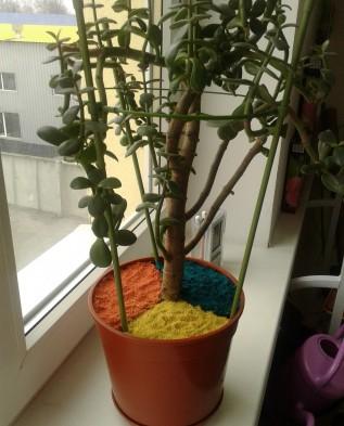 Щепа и сосновая кора: практическое применение в саду