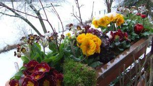 Какие цветы посадить на балконе, чтобы цвели все лето?