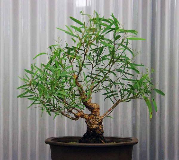 5 комнатных растений, которые защитят от вирусов и простуды