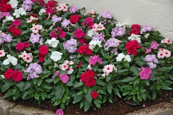 Садовница с 12-летним стажем рассказала, какие цветы лучше всего выращивать!