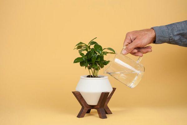 Вазон для самополива растений