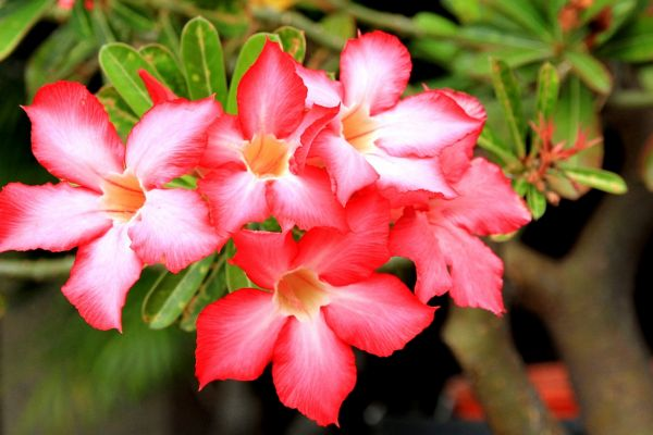Цветы, которые за внешним лоском скрывают смертельную угрозу