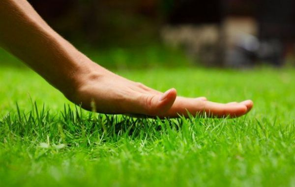 Стрижка газона: 9 главных вопросов