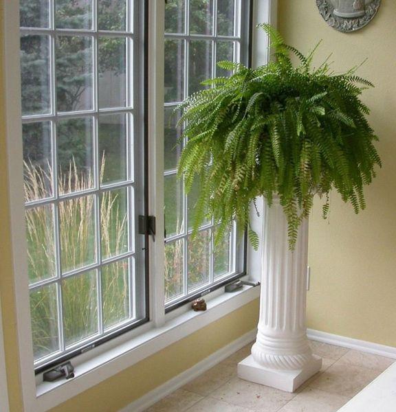 Самые благоприятные комнатные растения, которые приносят удачу и благополучие в семью