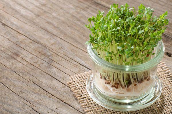 Огород — круглый год! Выбираем семена для огорода на подоконнике