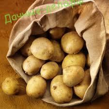 Обработка клубней картофеля растворами, минеральных удобрений и древесной золой