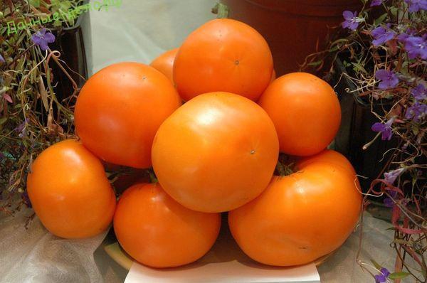 Описание сорта томата Дина и его характеристики