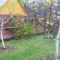 Как правильно утеплить молодую и взрослую яблоню на зиму